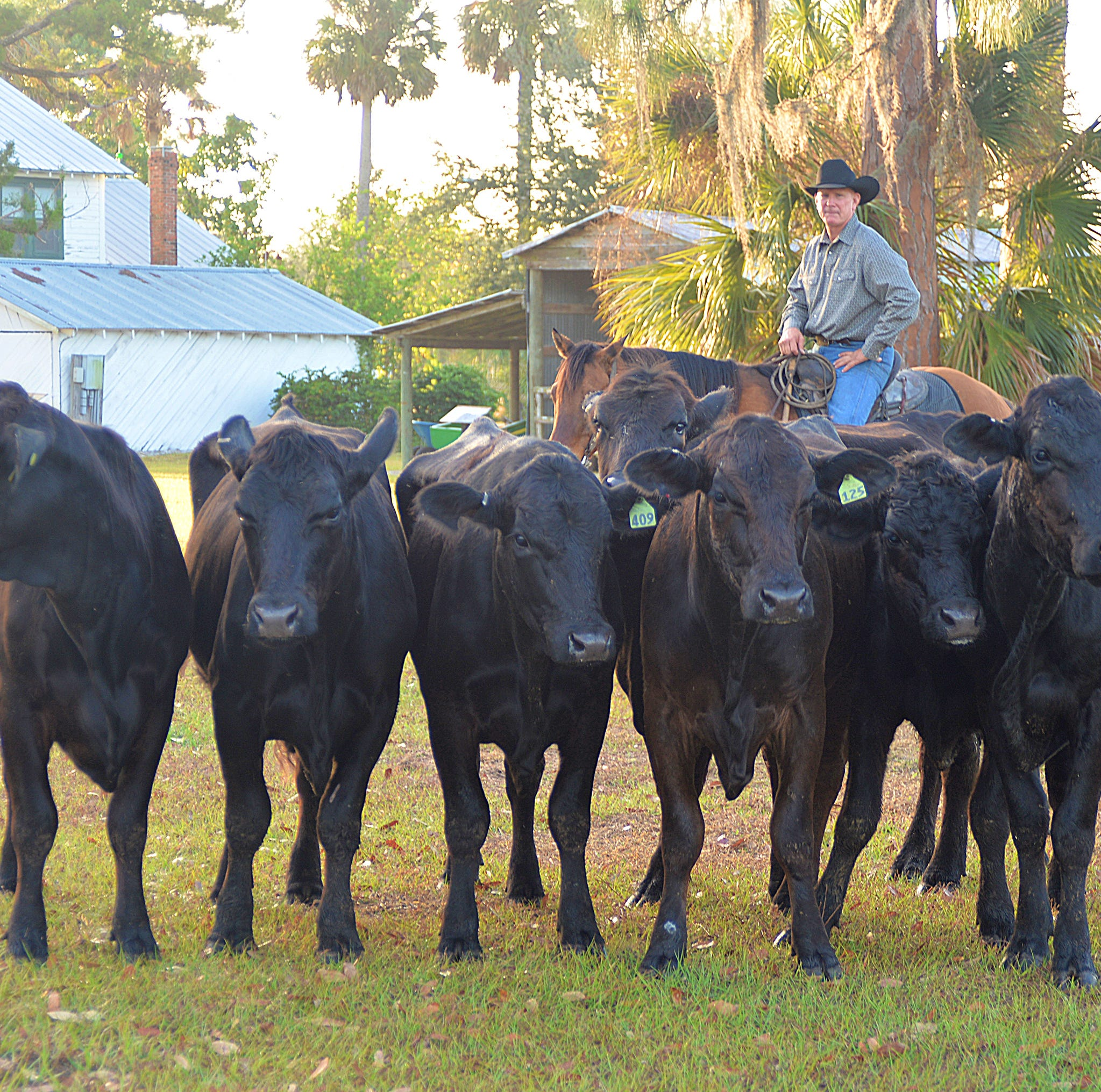 A cowboy from the nation's first Wild West and more at Paradise Coast stories weekend