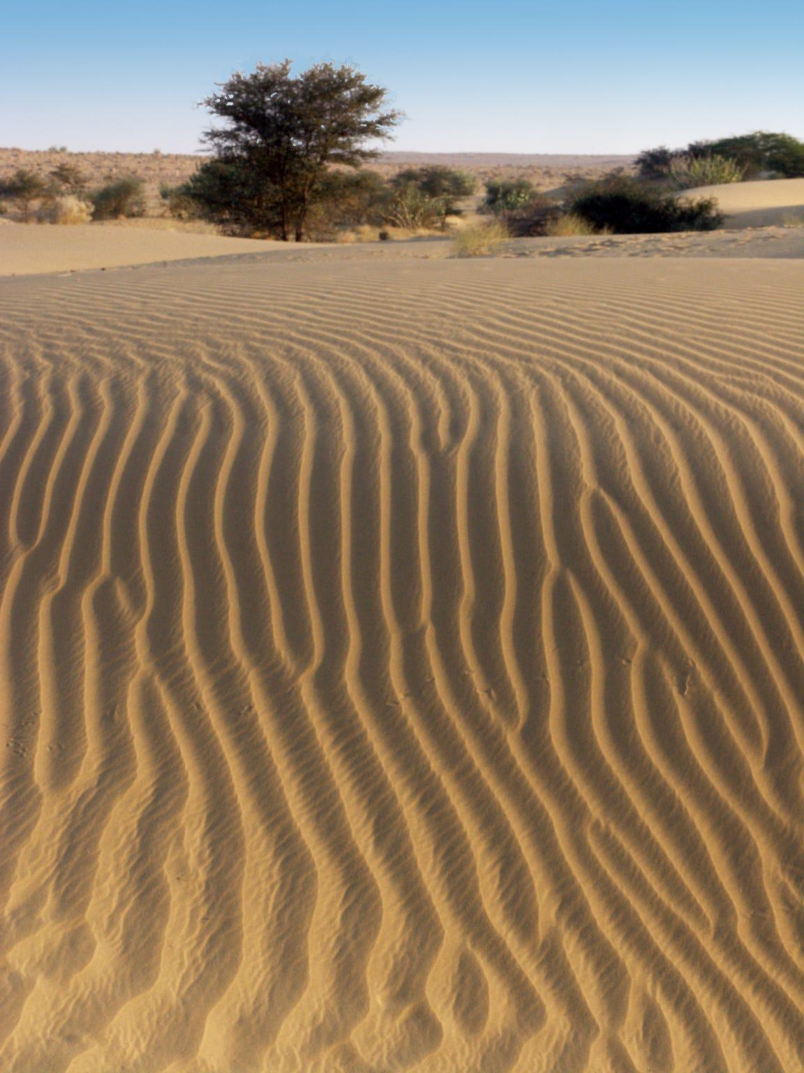 Dune fields in India's Thar Desert