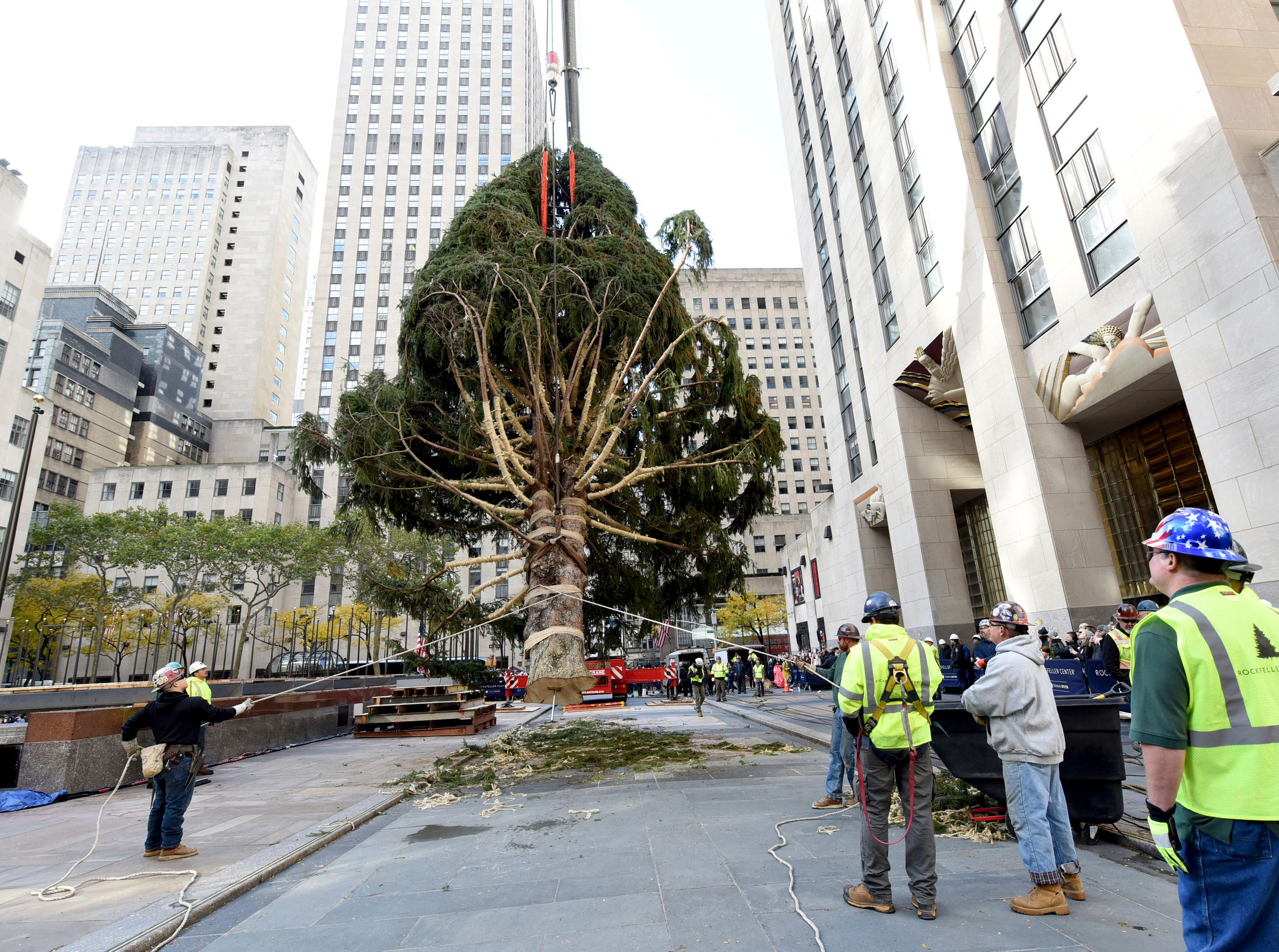 Rockefeller Center Tree from Wallkill reaches New York City home