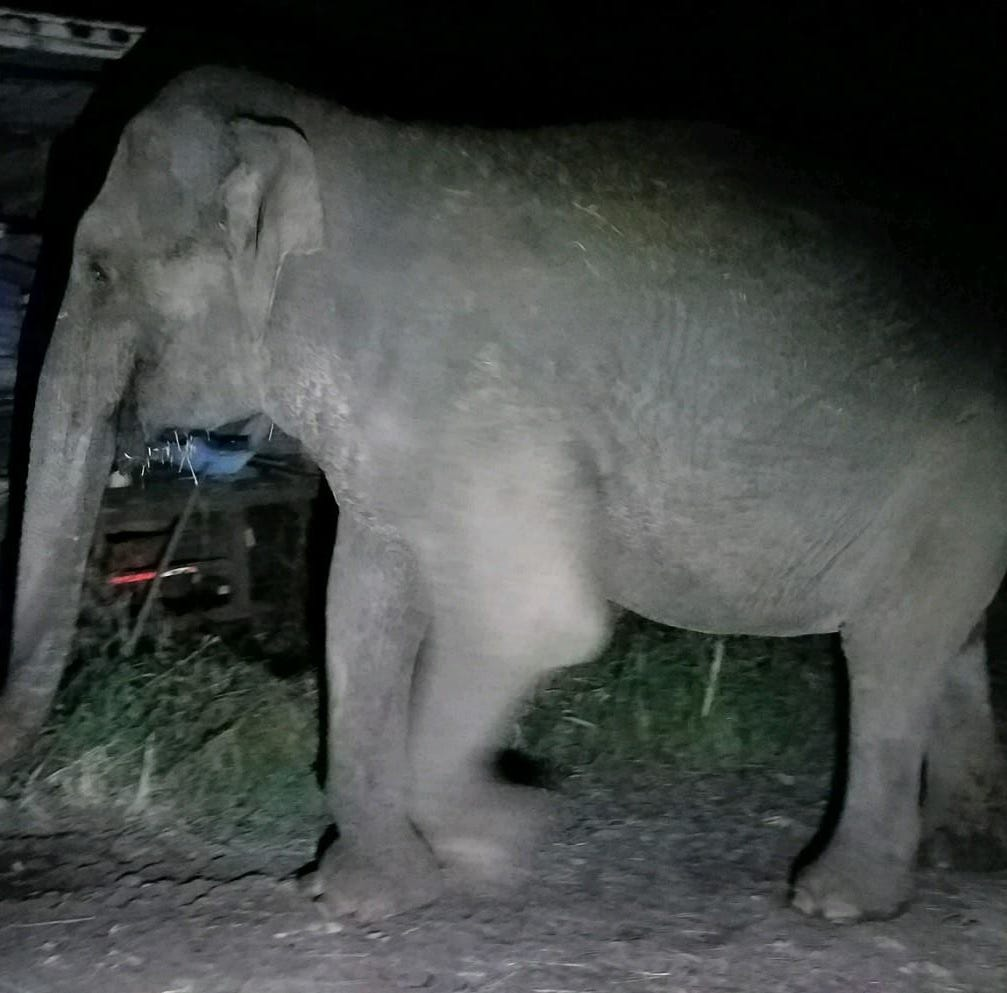An elephant was spotted walking in the hamlet Westtown Sunday night, police said.
