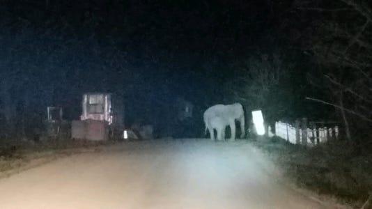 Elephant In Orange County