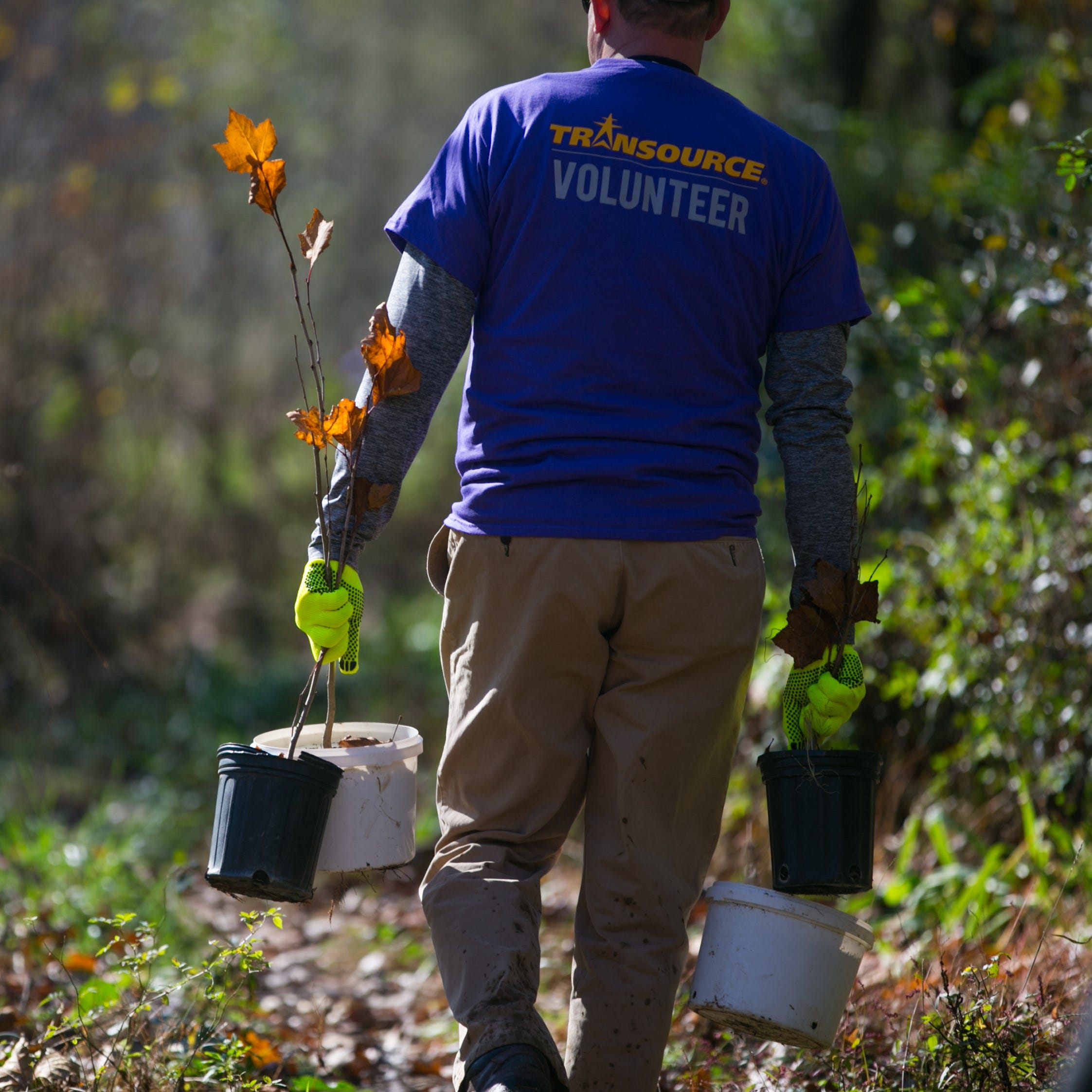 Public service or PR? Transource plants 600 trees