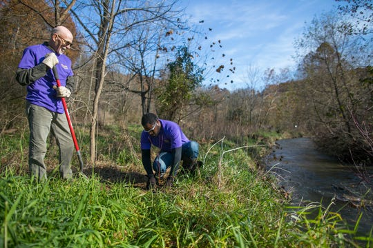 Volunteers from Transource energy plant trees  on Nov. 8, 2018, along the east branch of Codorus Creek in York County.
