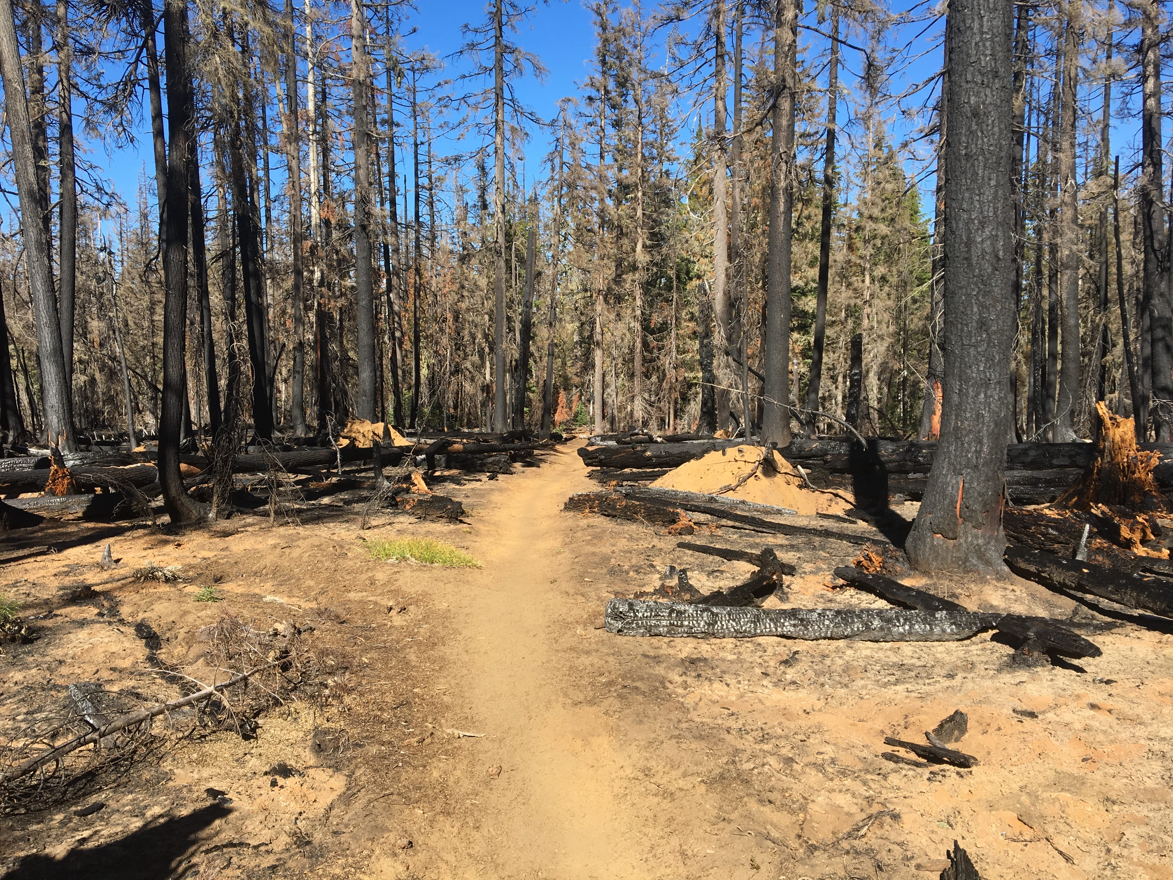The Obsidian Trail was burned by the Horse Creek Complex fires in 2017.