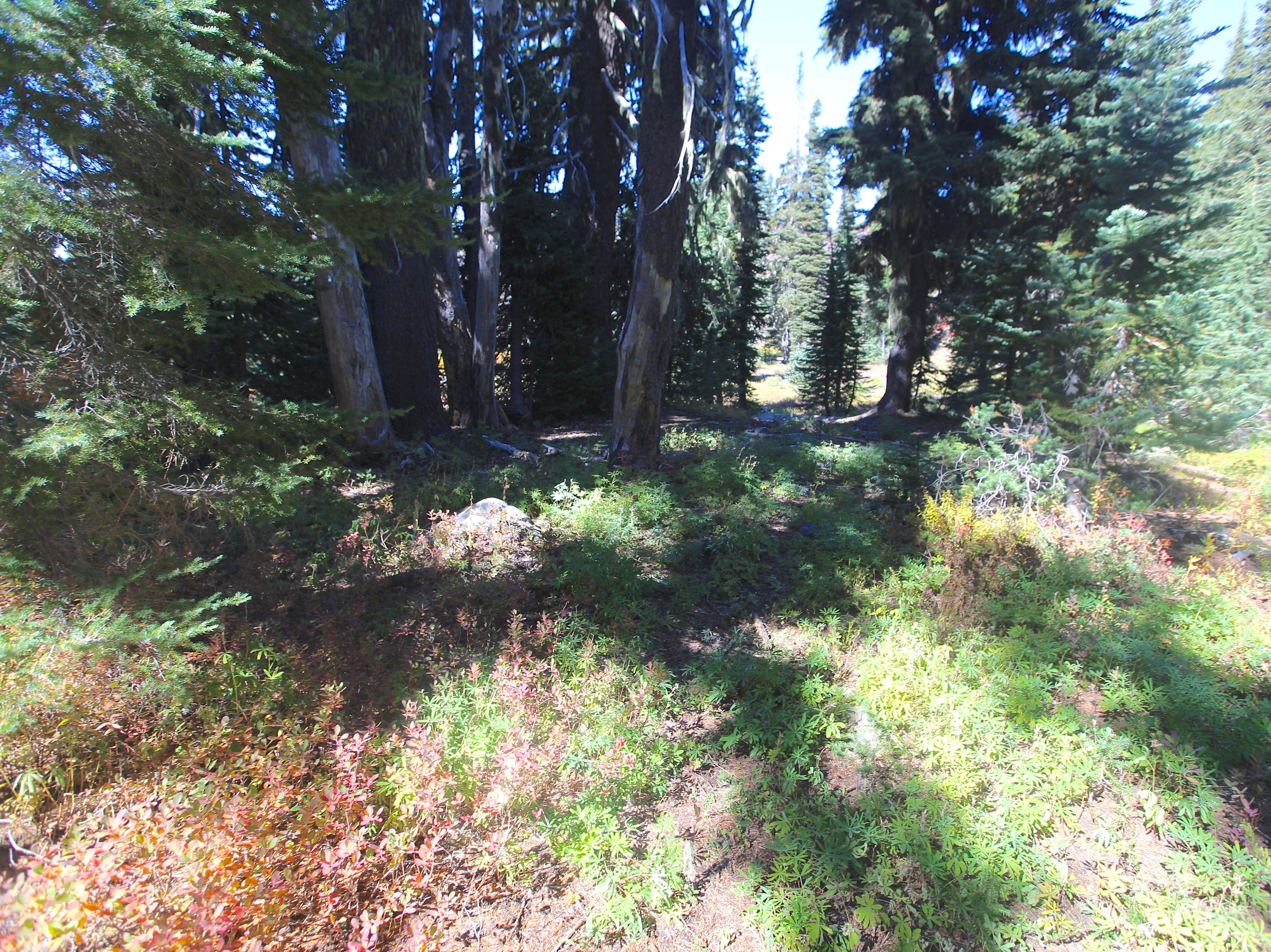 This plot was once barren ground along Obsidian Trail. Today, it has regenerated.
