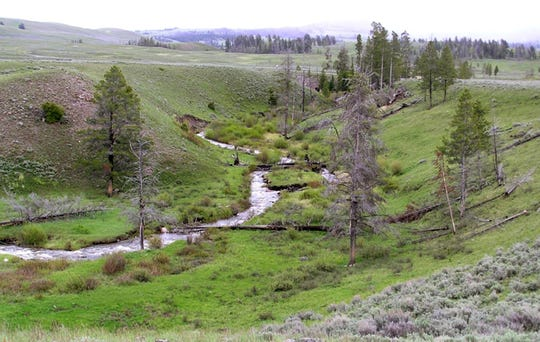 This 2015 photo provided by Oregon State University shows a stretch of Blacktail Deer Creek in Yellowstone National Park, Wyo.