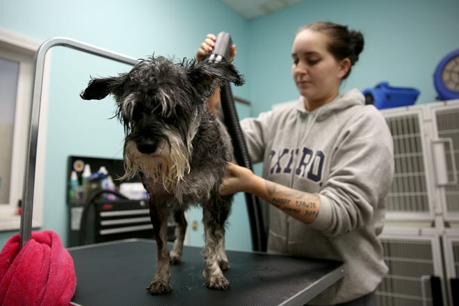 Groomer Alexus Hazelton blow-dries a dog on Monday, Nov. 12, 2018. Employees of Nature's Pet Market & Sunny Paws Grooming are using the OregonSaves retirement program.