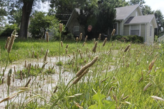 A file photo shows tall grass outside of a Springfield home.