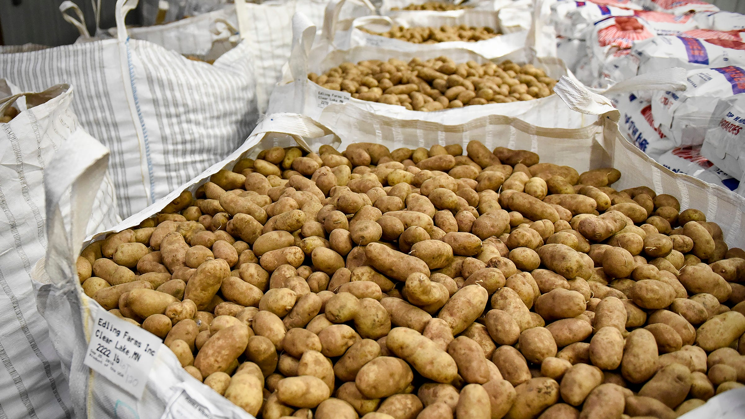 Edling Farms, Clear Lake, donated about 36,000 pounds of potatoes Monday, Nov. 12, to Union Gospel Mission in St. Paul. The potatoes will feed about 60,000 people on Thanksgiving.