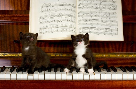 1121 Ynmc Catty Kittens On Piano