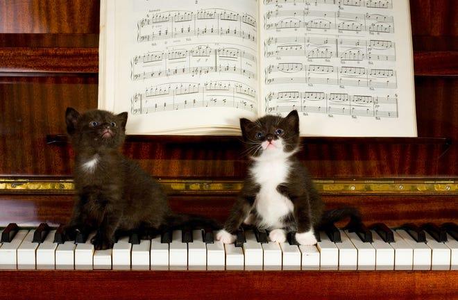 A couple of feline aficionados relax atop a piano.