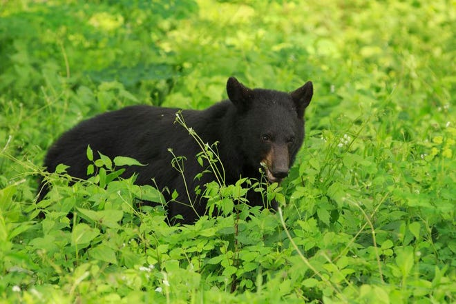 A vehicle struck a black bear on I-64 in New Albany around 8 p.m. Sunday night, the Indiana Department of Natural Resources says.