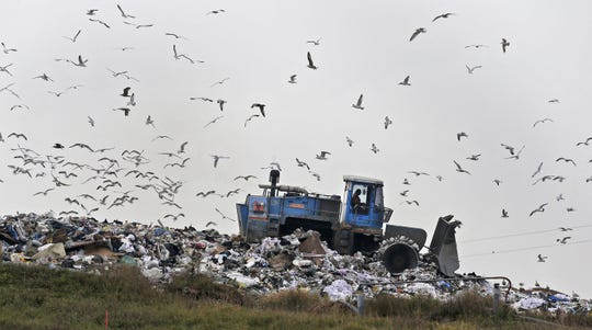 A worker plows garbage at the Outagamie County landfill, where thousands of gulls gather to feed on garbage.