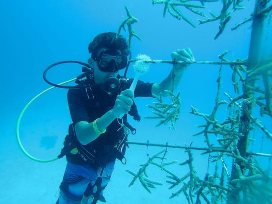 William David used his Scuba Merit Badge and Open Water Diver Certification as a Boy Scout to participate in the Coral Conservation Project in Grand Cayman this summer.