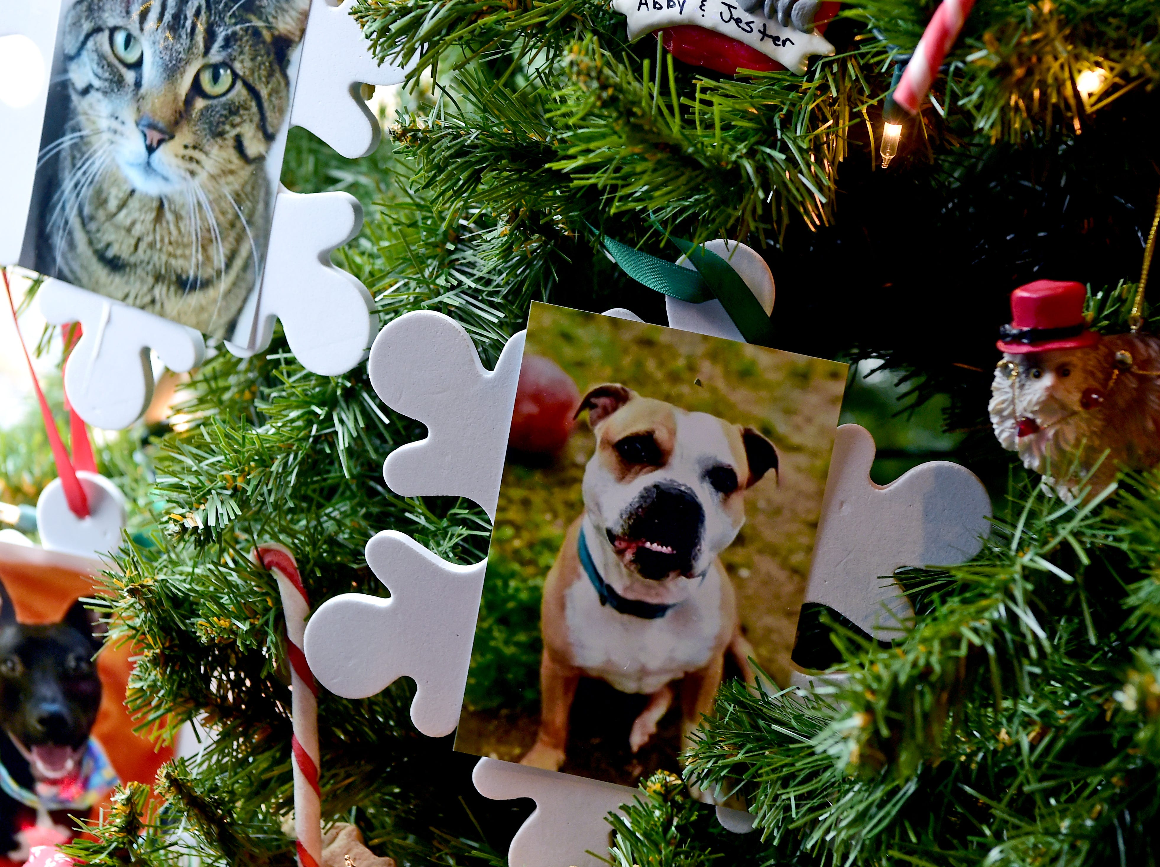 Tree decorated by Broome County Humane Society. Roberson Museum and Science Center's annual Home for the Holidays event opens on November 14 and continues through January 6. The event features hundreds of elaborately decorated holiday trees and displays. November 12, 2018.