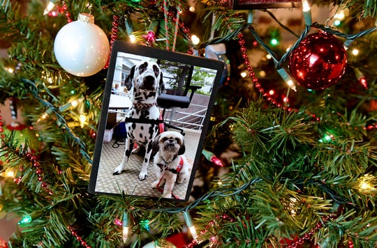 A tree decorated by Bright and Beautiful Pet Therapy.