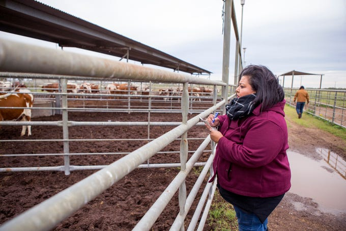 Della Serna (left) an employee at the El Coyote Ranch near Kingsville, looks at cattle to be sorted for auction at the ranch on Tuesday, November 13, 2018. In addition to her multiple duties at the ranch, Serna serves on the Board of Directors for the Texas FFA Foundation.