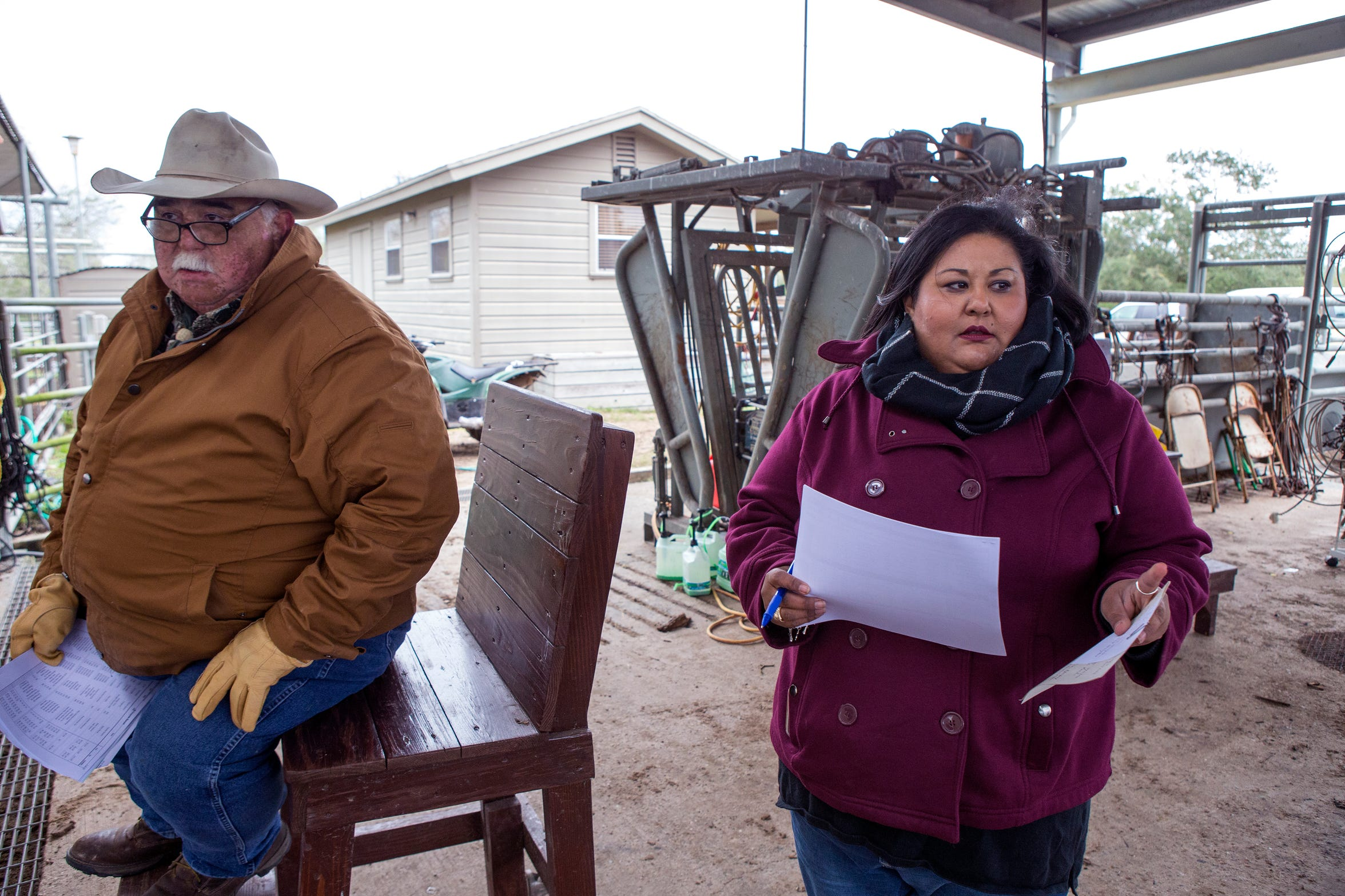 Della Serna (right) and her father, Felix Serna, director of registered livestock operations, sort cattle to be sold at auction at the El Coyote Ranch on Tuesday, November 13, 2018. Della began following her father around the ranch when she was about five and began working at the ranch when she was 12. Now, Della plays a major role in the ranch's large cattle and pure-bred operations, maintainingÊrecords, dealing with genetics, keeping up with USDA regulations, managing proceduralÊschedules for livestock, halter breaking and showingÊanimals, whileÊmarketing the ranch's prized cattleÊto prospective buyers.
