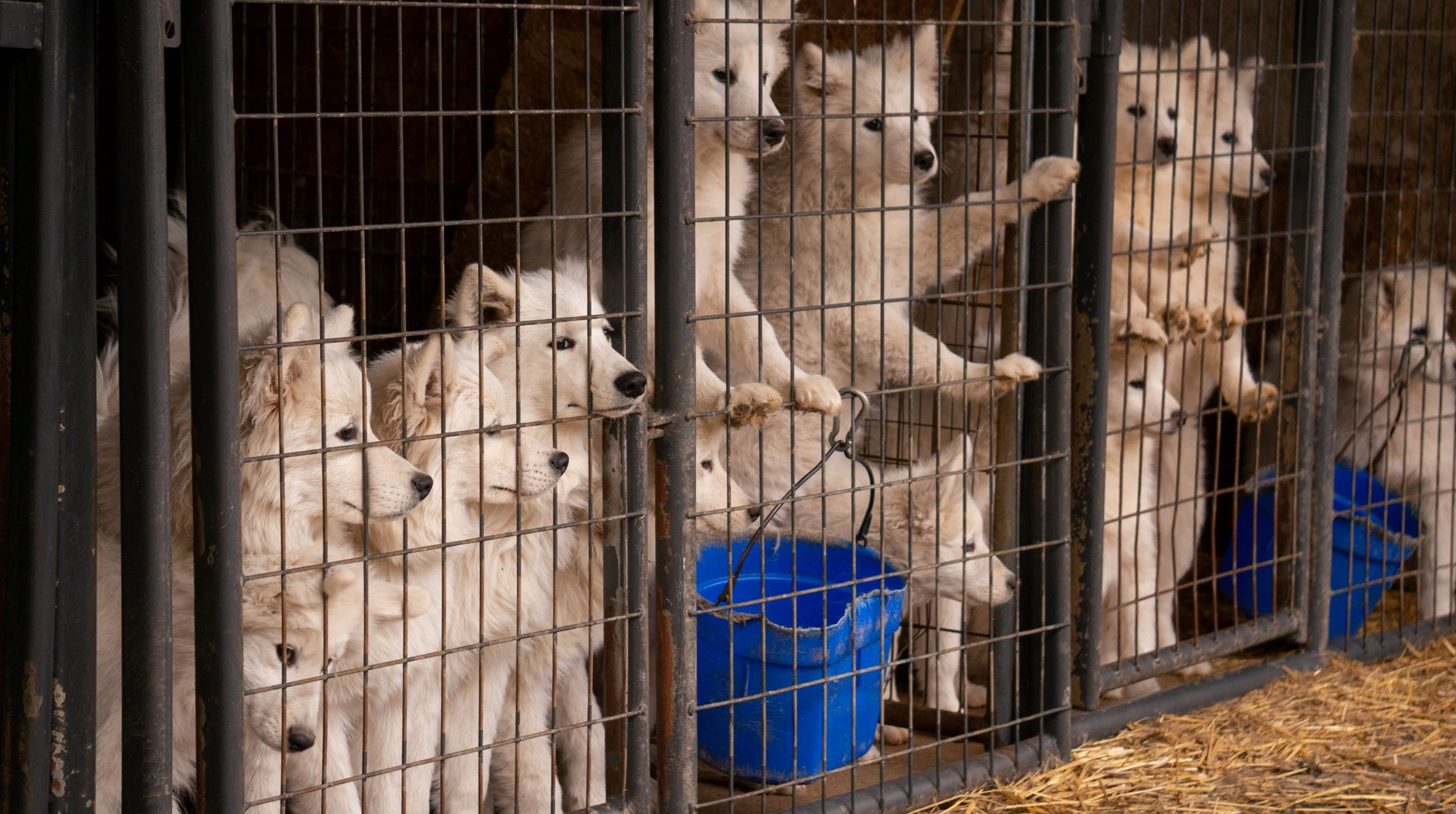 Dogs Taken From Iowa Puppy Mill Monday Not Up For Adoption