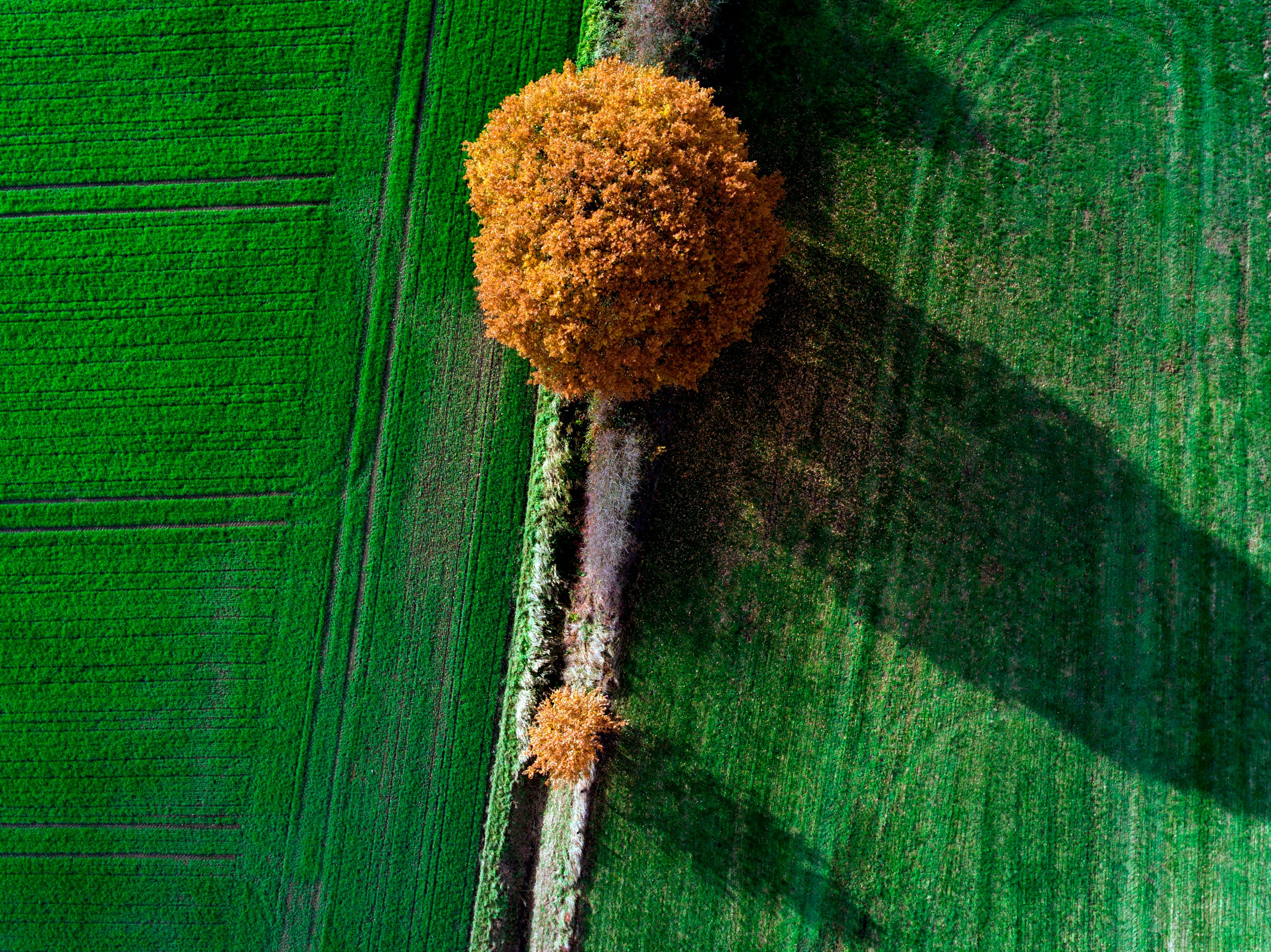An aerial picture taken on November 13, 2018, in Vinnum, Germany, shows trees with automn colors in fields.