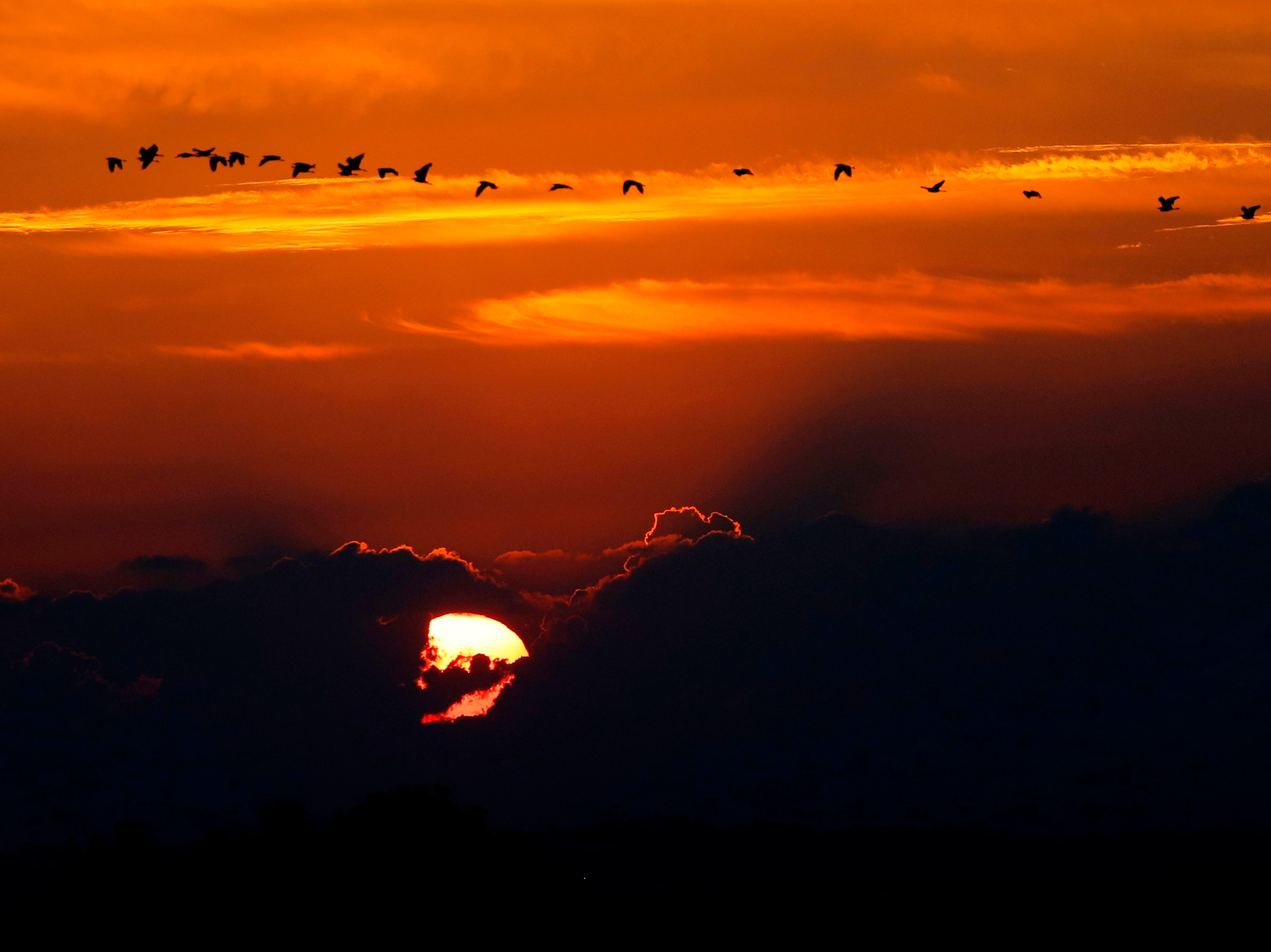 Birds fly at sunset in the southern Israeli town of Sderot on November 13, 2018.