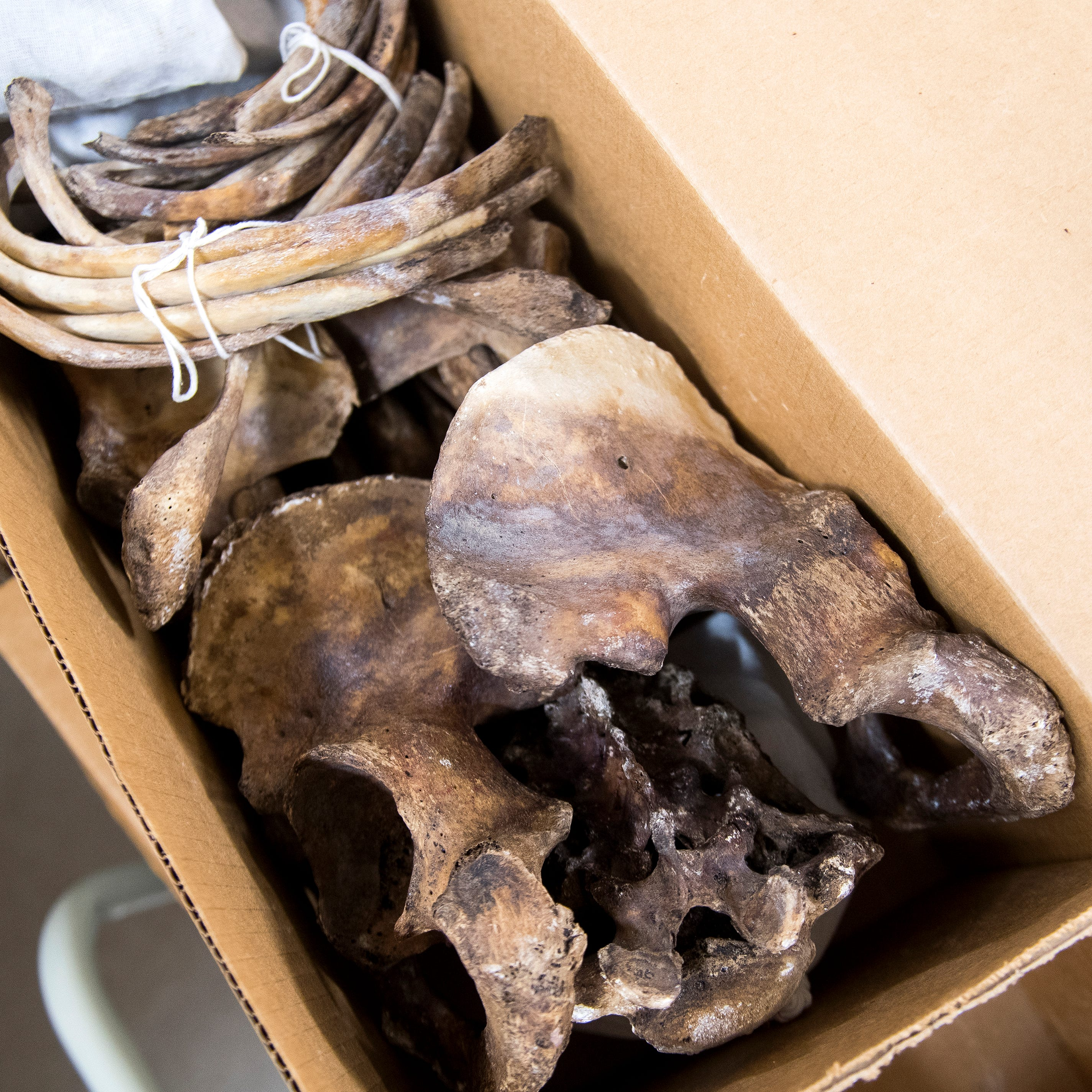 What happens to bones from UT's famous 'Body Farm'? They're cleaned, boxed and studied