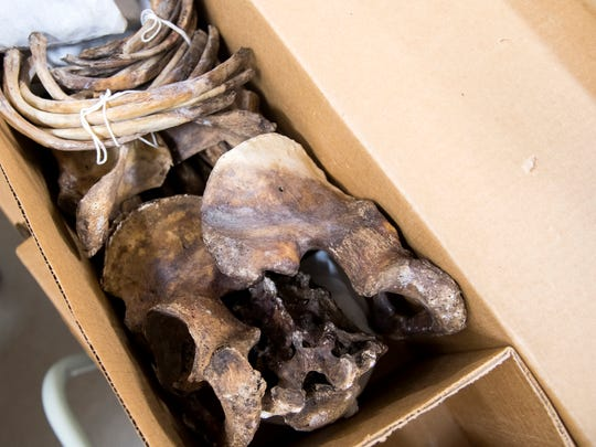 Researchers and scientists come to UT's Bass Donated Skeletal Collection to study what the bones tell them.