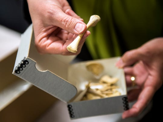 Lee Meadows Jantz, associate director of UT's Forensic Anthropology Center, holds a box containing the skeleton of an infant stored at the university's Bass Donated Skeletal Collection.