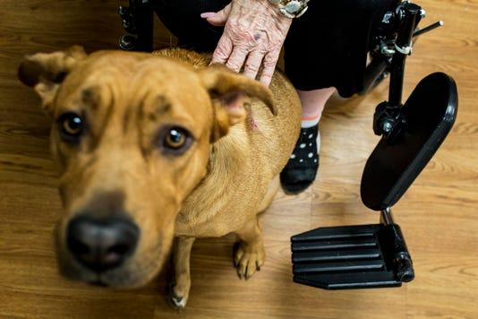 LEDE - Pet Therapy Program