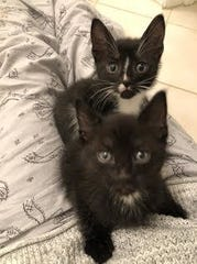 Kittens DaVinci and Leonardo will be hoping to find their new best friend at the Randolph Animal Shelter's Special Kitten Adoption on Saturday.