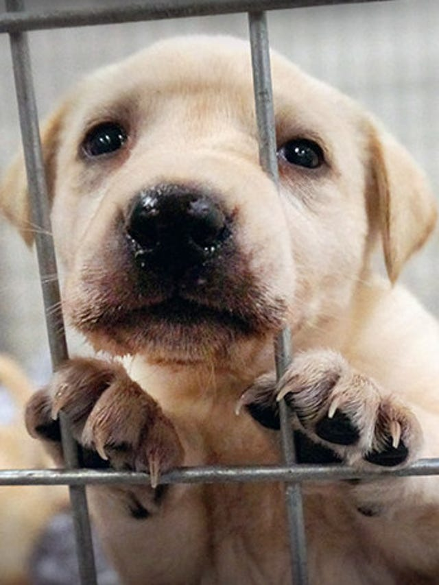 ASPCA's Barred from Love program urges public to report