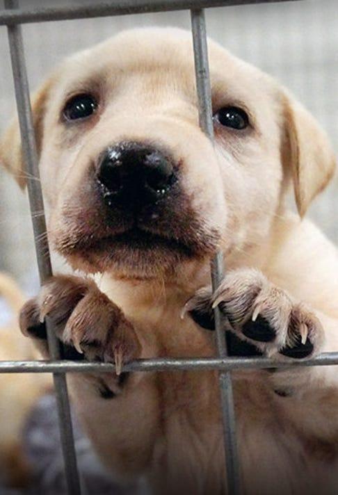 puppy ASPCA