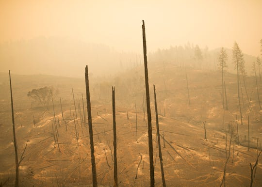 Trees burned by the Camp Fire stand bare and empty on Nov. 12 in Butte Valley, Calif.