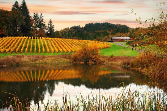 Coeur de Terre Vineyard will host a Thanksgiving weekend open house from Friday to Sunday, Nov. 23-25.