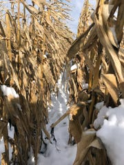 "That ""pretty"" snow that we had dumped on us early this year can be the final straw for some farmers."