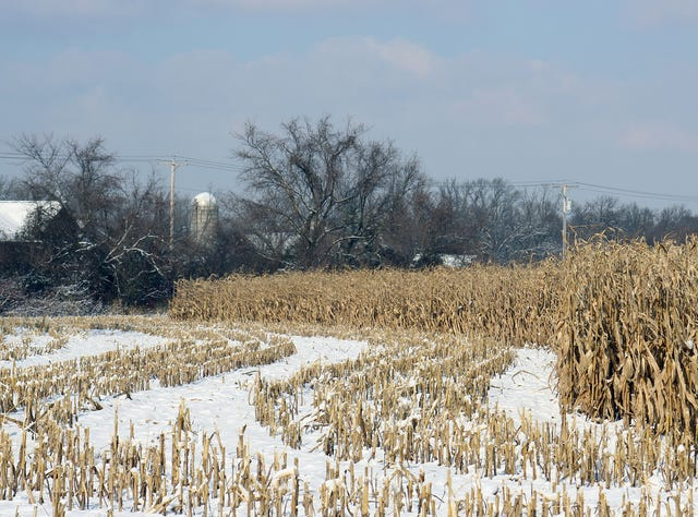 Image result for unharvested crops