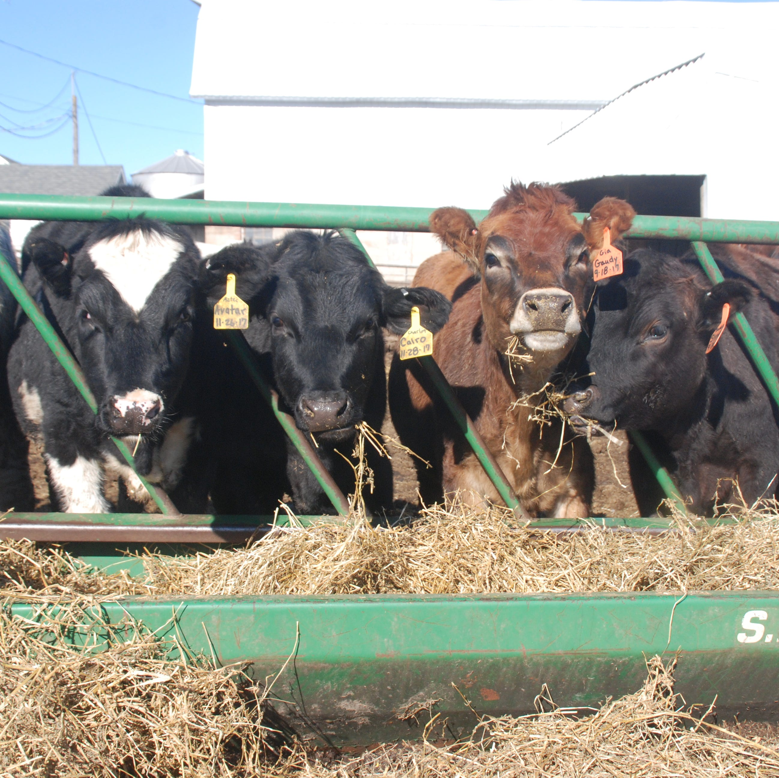 State approval of manure spreading on snowy ground has environmental group worried about water pollution