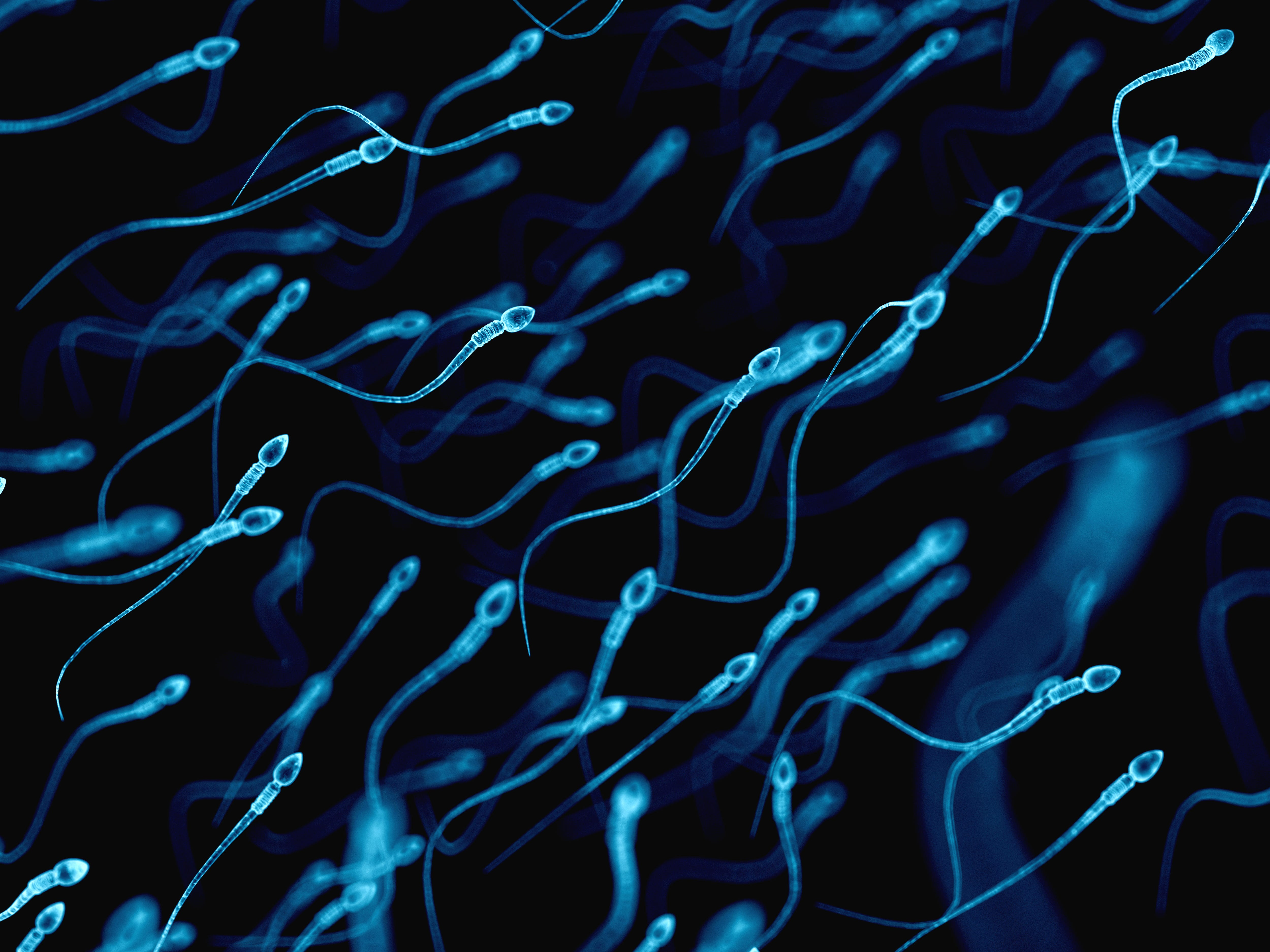 Sperm don't like heat, so climate change could damage male fertility, study says