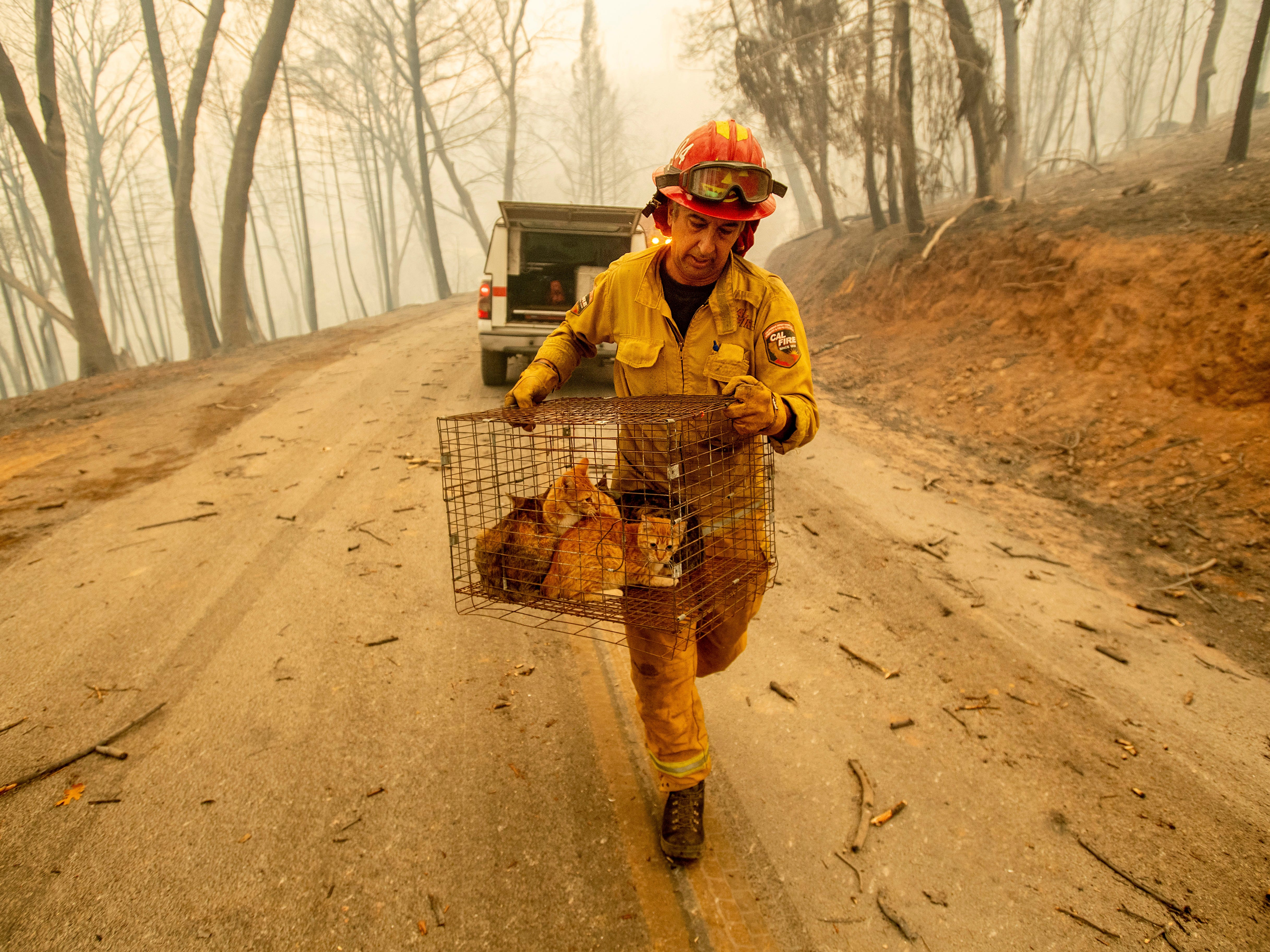 Capt. Steve Millosovich carries a cage of cats while battling the Camp Fire in Big Bend, Calif., on Friday, Nov. 9, 2018. Millosovich said the cage fell from the bed of a pick-up truck as an evacuee drove to safety.