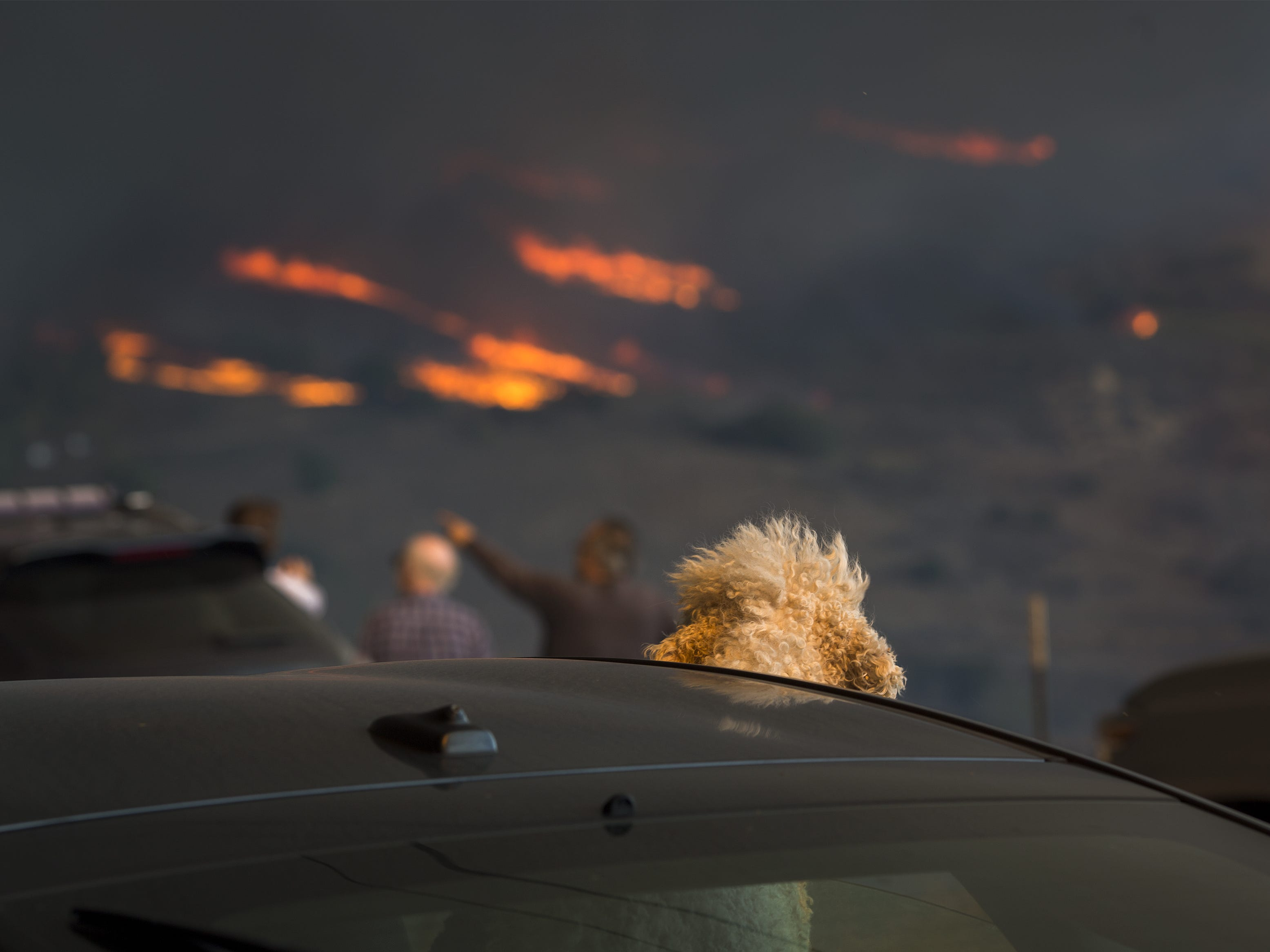 A dog watches from a car as flames approach during the Woolsey Fire, on Nov. 9, 2018 in Malibu, Calif.