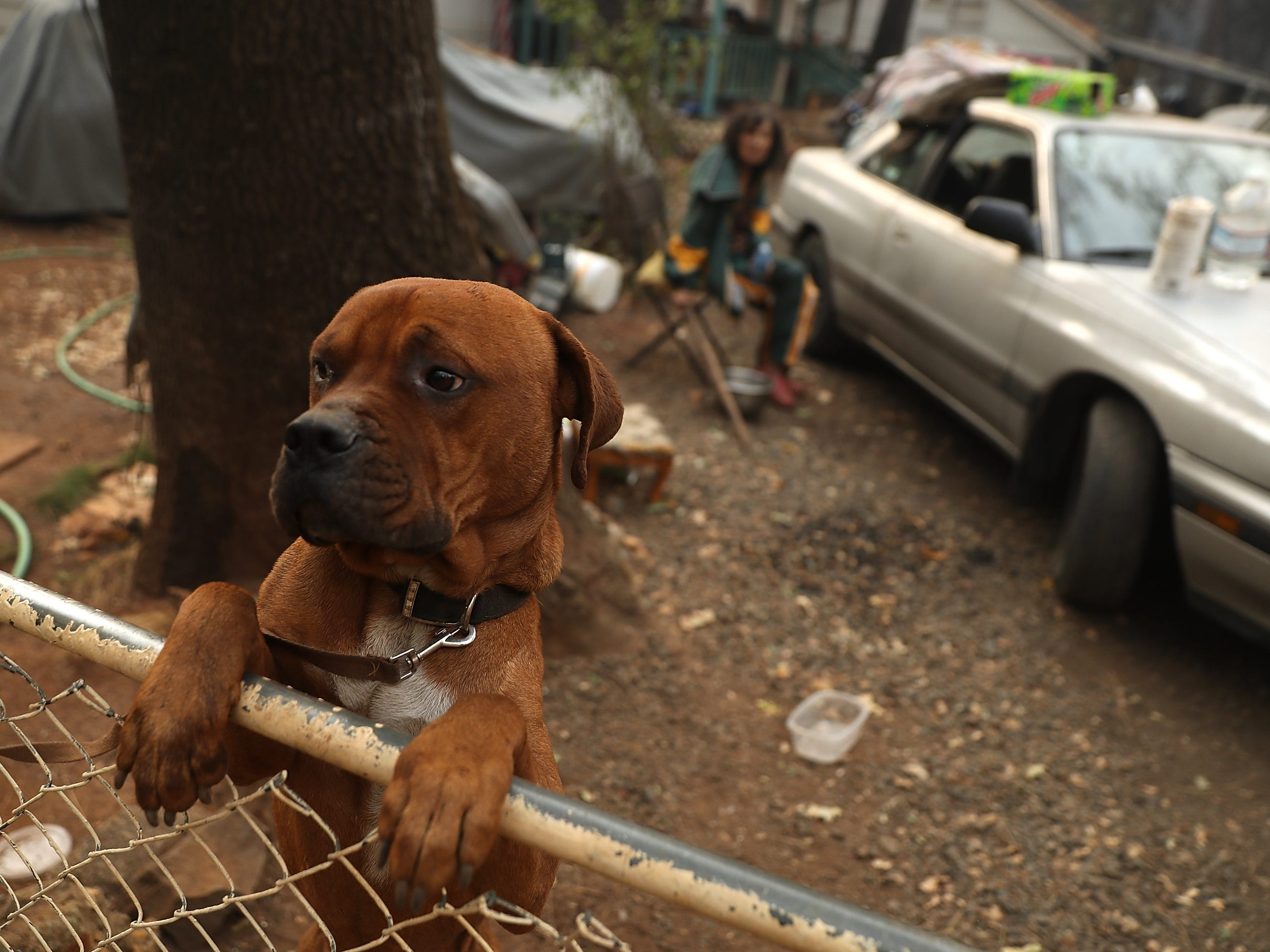 A dog named Rockey stands on the fence in front of the home of Jimmy Clements that survived the Camp Fire on Nov. 11, 2018 in Paradise, Calif.