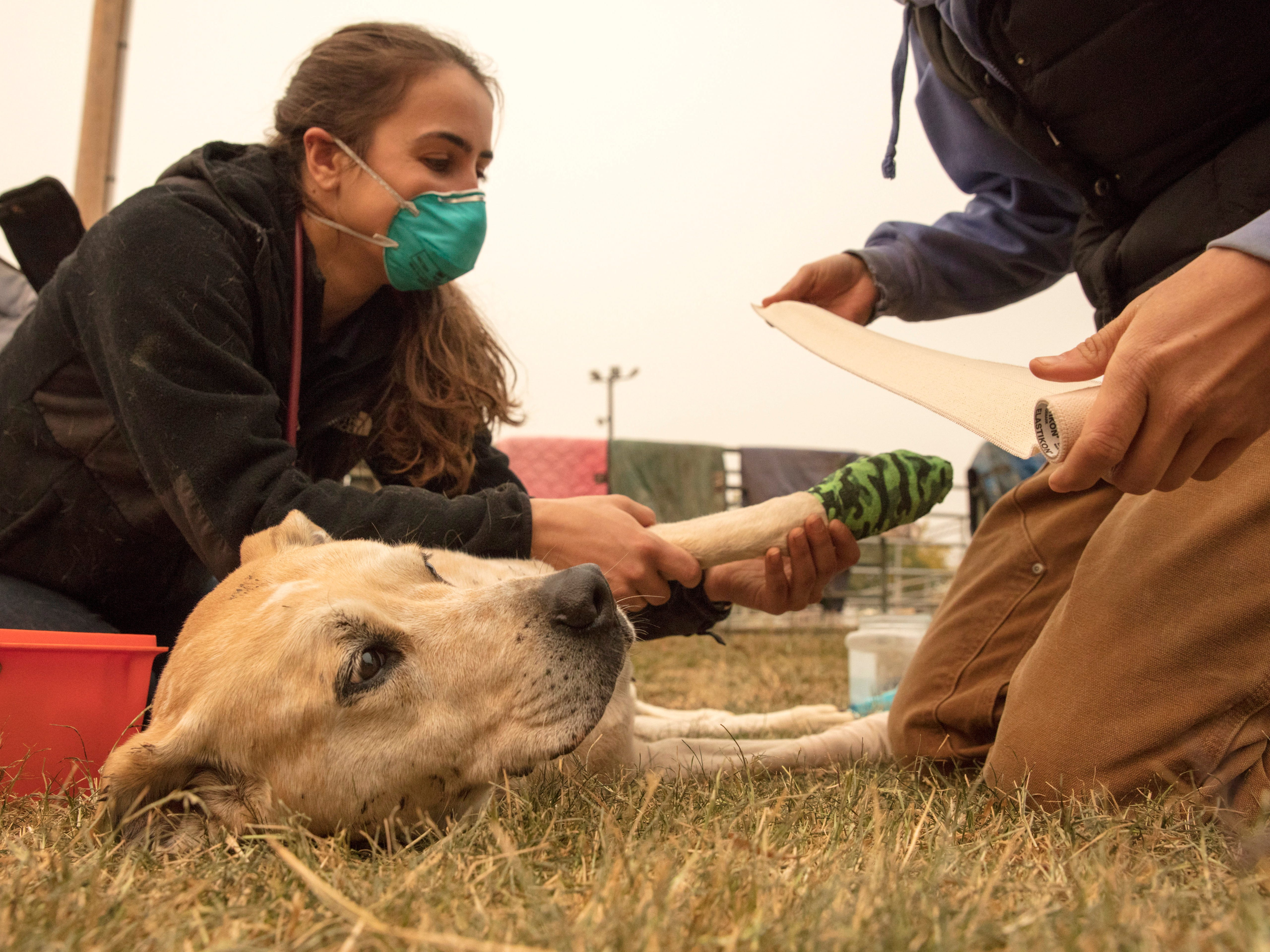Members of the U.C. Davis Veterinary Emergency Response Team, Ashley Nola, left, and Catherine McFarren, tend to burns on a dog that was brought in to the Butte County Fair Grounds where large animals are being sheltered during the Camp Fire, on Nov. 10, 2018.
