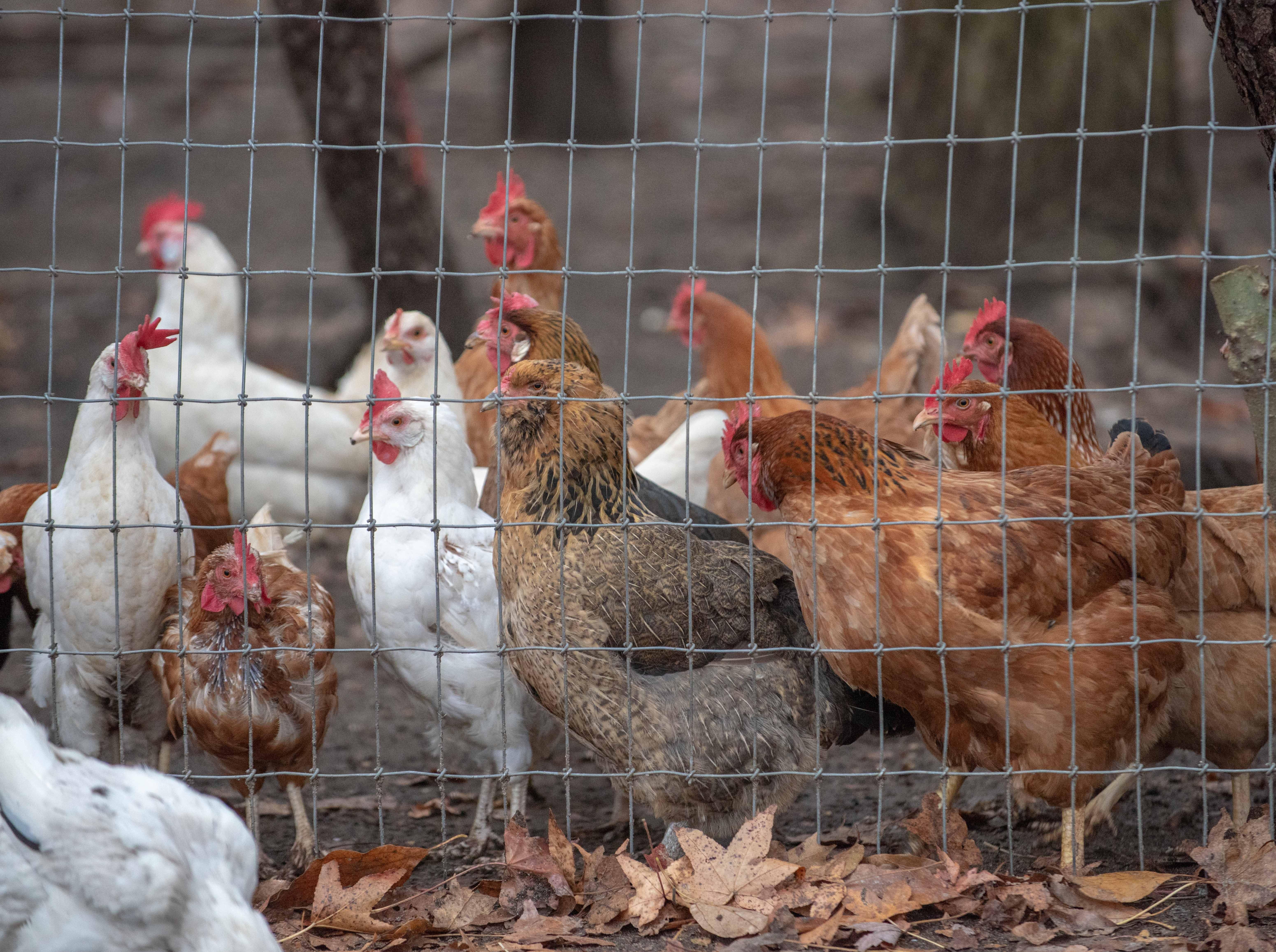11/13/18- Allaire Community Farm, Wall Twsp., photo/James J. Connolly/Correspondent