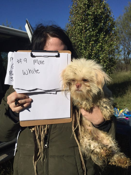 About 80 Shih Tzu Dogs Seized From Rural House In Callahan County