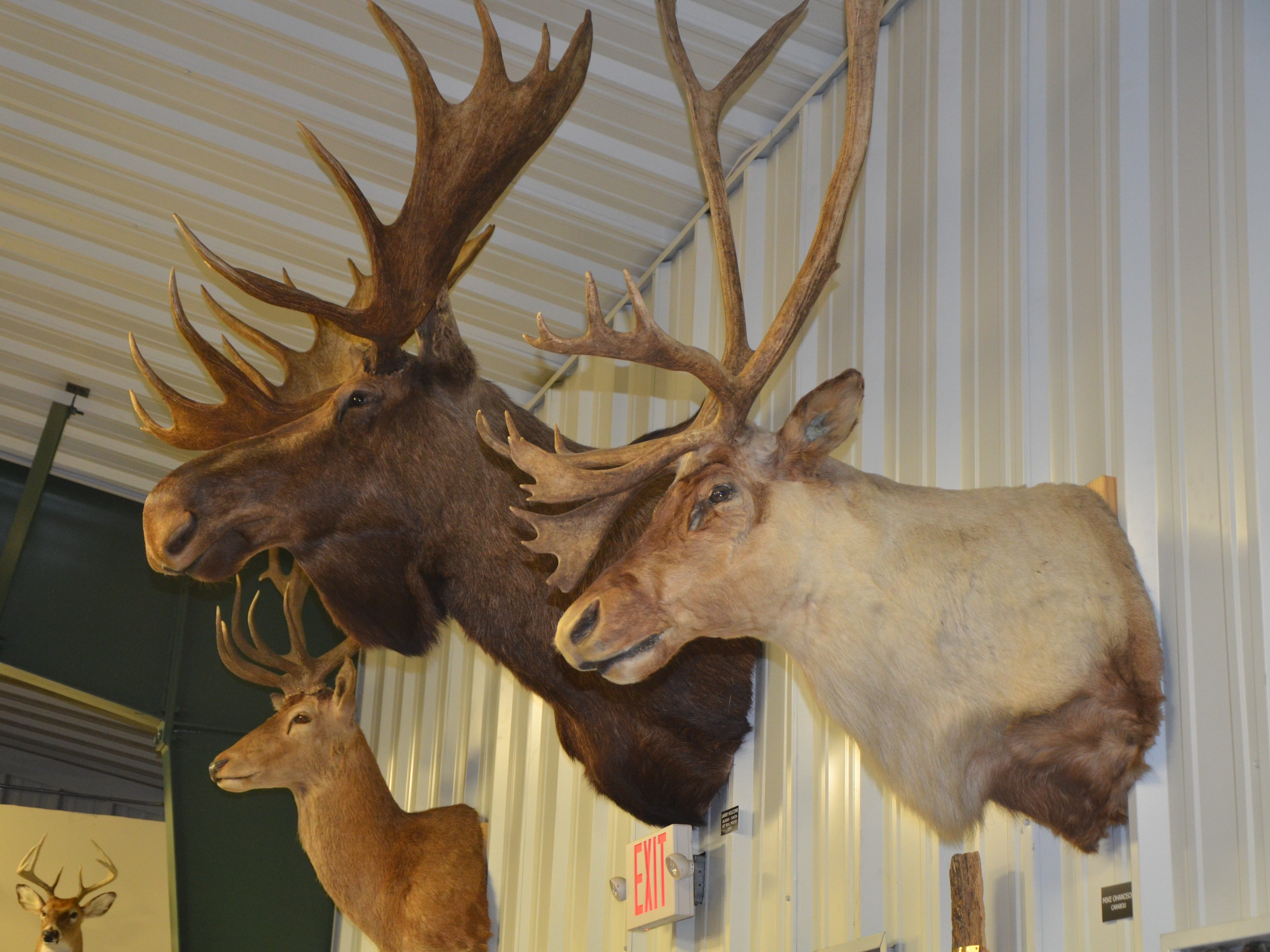 Big game trophies hang inside Whitetail Farms in Olivet.