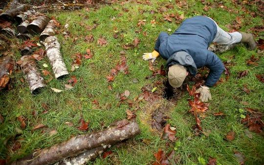 Jim Aho peers down a hole leading to a beaver den located on Barker Creek near Central Kitsap Presbyterian Church.