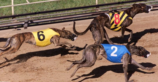 Greyhounds race on the dog track at Iowa Greyhound Park in Dubuque in this 2015 file photo.