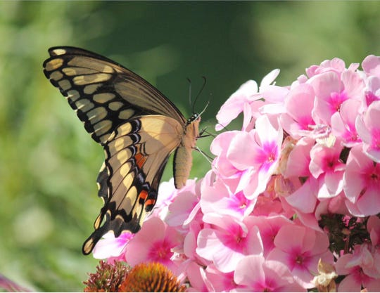 'Beauty in Nature,' by Joan Geraldson of Manitowoc, took second place in the Mariners Trail calendar photo contest.