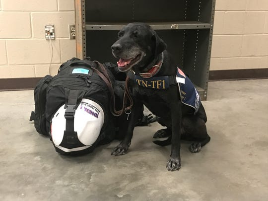 Fergie, a human remains search dog with the Memphis-based Tennessee Task Force One who works with Kari Harbin, waits for orders at a Hurricane Irma site.