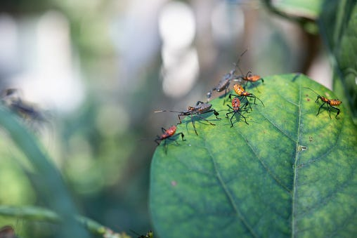 When using integrated pest management in your yard proper identification of insects is a must.